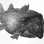 Арменска Риба